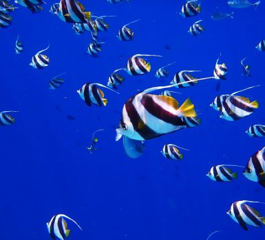 Best coral reefs in the world for snorkeling